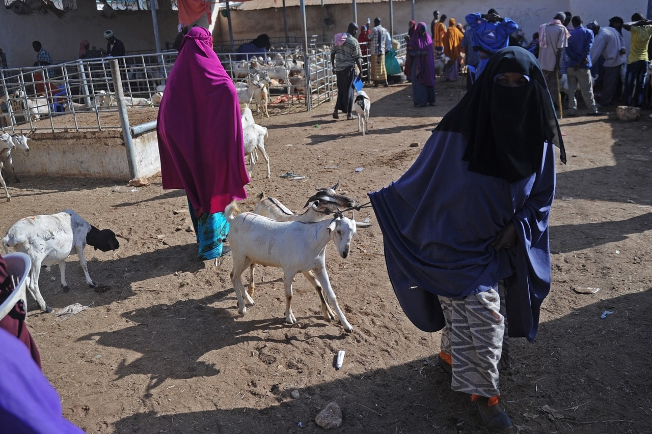 Somali female traders wait for customers at a livestock market in Garowe, Puntland, 25 January 2018, MOHAMED ABDIWAHAB/AFP/Getty Images